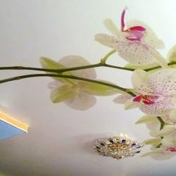Фотопотолок с цветами, купить в Гомеле
