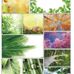 Фотопечать листья деревьев в Гомеле
