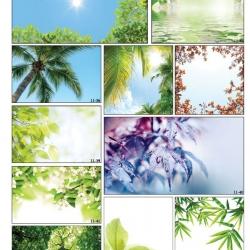 Фотопечать пальмы в Гомеле