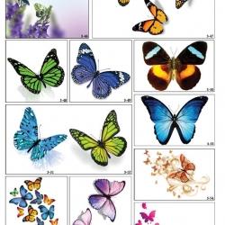 Фотопечать бабочек в Гомеле