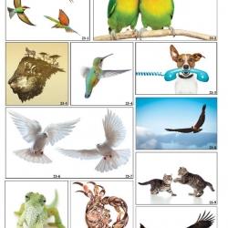 Фотопечать птицы в Гомеле